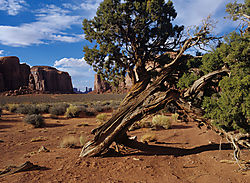 Arizona-35.jpg