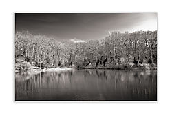 Fabick_Pond_platinum_toned.jpg
