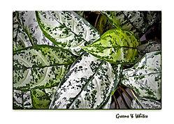Greens_Whites.jpg