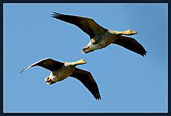 5f-Birds.jpg