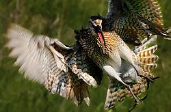 Bird-Lof-2c-web.jpg