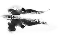 Seagull-3-web.jpg