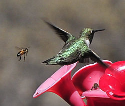 Bee_Hum_Pair_Web.jpg