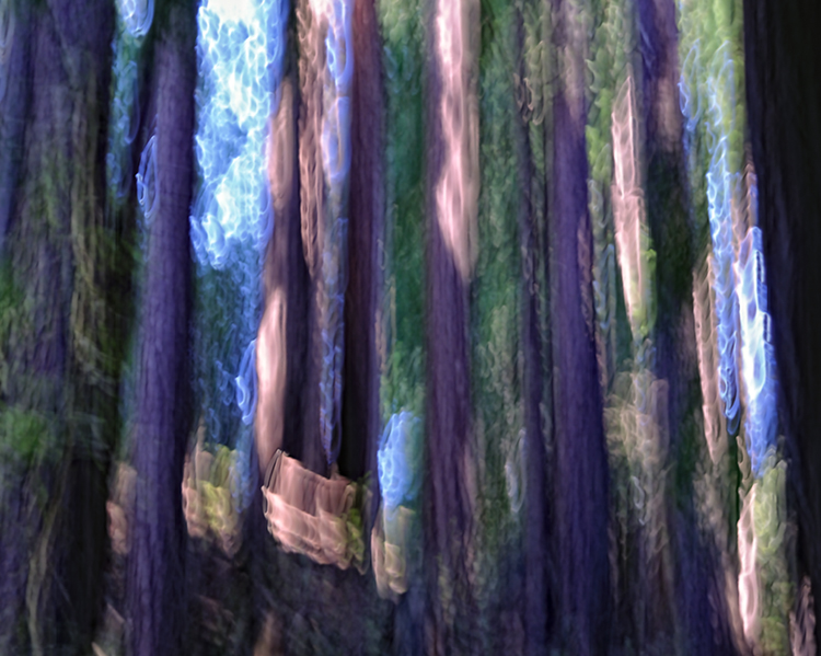 DSC4049_Redwood_Blur_WEB