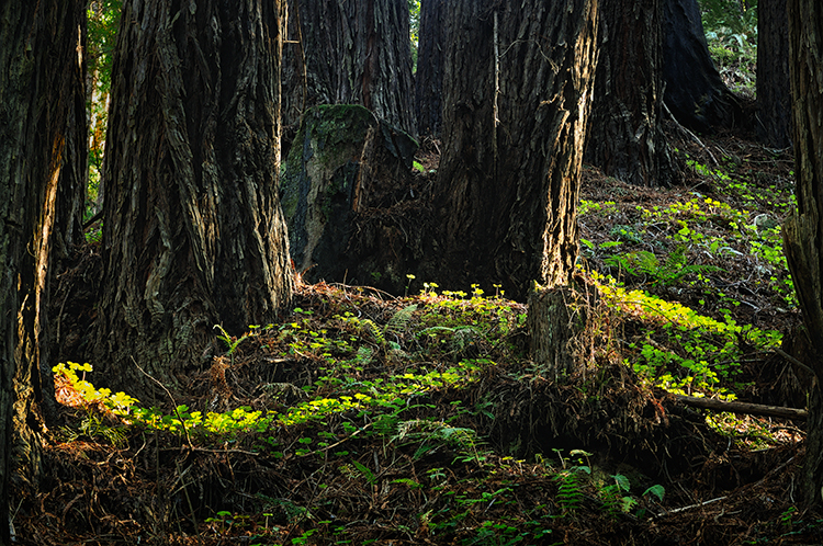 DSC4113_Forest_Primeval_02_WEB