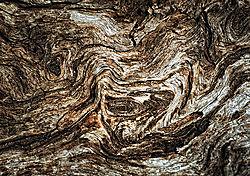 DSC3964_Wood_Waves_WEB.jpg