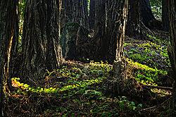 DSC4113_Forest_Primeval_02_WEB.jpg