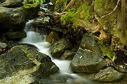 Treeborn_Creek_.jpg