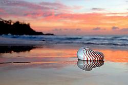 Sunshine_sunrise_and_shell.jpg