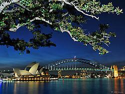 Sydney_Harbour_and_tree_web_nik.jpg