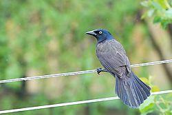 birds_1.jpg