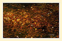 Leaves_Under_Water3M.jpg