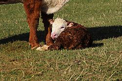 Newborn_4-30_1.jpg