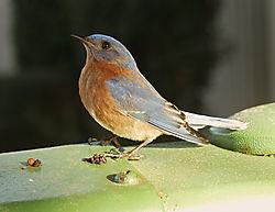 Doyles_Bird.jpg