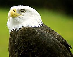 Eagle2DSC_0195.jpg