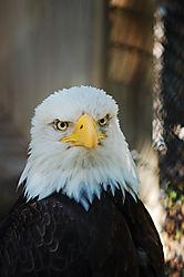 Eagle_11.jpg