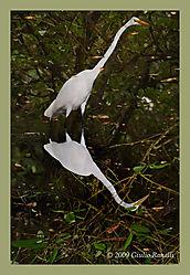Heron_Reflections.jpg