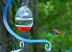Hummingbird_22.jpg