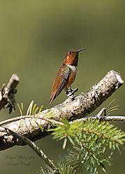 Nikonian_Bird_Contest.jpg