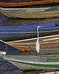 Tapajos-Egret.jpg