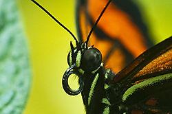 Butterflies_30.jpg