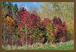 Autumn_Colours_DSC_5109.jpg