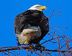 Eagles_09_2_copy.jpg