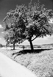 09_SFX200_AUG09_Lipbach_Richtung_Markdorf.jpg