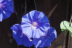 Vivid_Blue_Shots_0004Vivid_Blue_Jpegs_raw.jpg