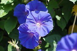 Vivid_Blue_Shots_0009Vivid_Blue_Jpegs_raw.jpg