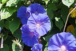Vivid_Blue_Shots_0013Vivid_Blue_Jpegs_raw.jpg