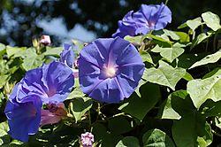 Vivid_Blue_Shots_0017Vivid_Blue_Jpegs_raw.jpg