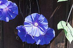 Vivid_Blue_Shots_0019Vivid_Blue_Jpegs_raw.jpg