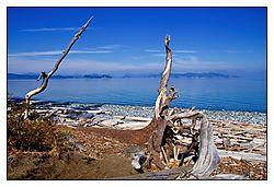 Driftwood4.jpg