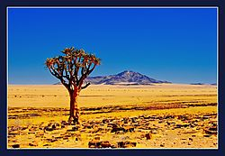 Solitary_Quiver_Tree.jpg