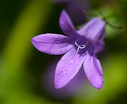 Flower-2-2.jpg