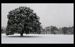 screenshot_1920x1200_winter_tree-3.jpg