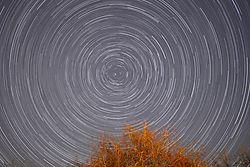 Backyard_Star_Trails.jpg