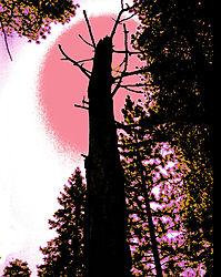 DSC_1567pink_sun_tree_copy.jpg