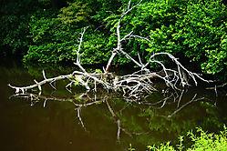 Fallen_Tree.jpg