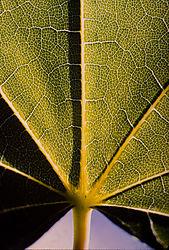 Leaf21.jpg