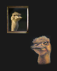 Ostrich_likemother_likedaughter.jpg