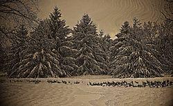 Rays_of_Winter.jpg