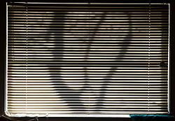 WINDOW_SHADOW.jpg
