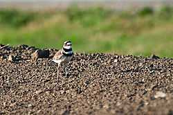 Turk_Joe_Killdeer-8.jpg