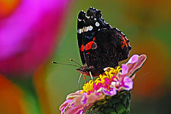 Butterfly-21.jpg