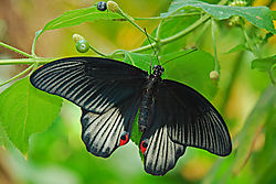 Butterfly-41.jpg