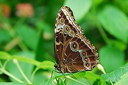 Butterfly30.jpg