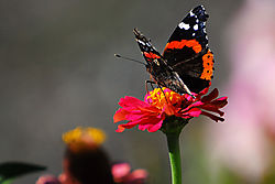 Butterfly34.jpg