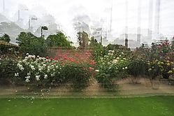Multiexposure_roses_copy.jpg
